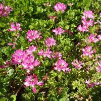 レンゲの花咲く