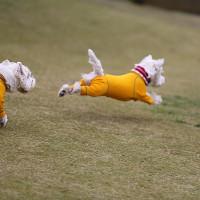 11月の白犬集会~♪