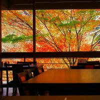 京都高尾の老舗の紅葉