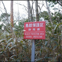 高ドッキョウ登山