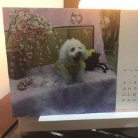 癒しの店長犬カレンダー