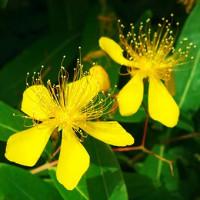 近所に咲いている花たち