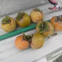 我が家の初収穫