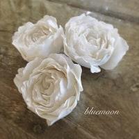 白いバラ♪
