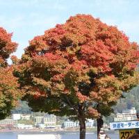 そろそろ紅葉シーズンがはじまります!(ヤマハ・YSP大分)