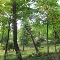 緑の小径のその先に聖堂が見える。 ~ボヤナ聖堂・ブルガリア~