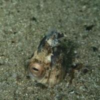 NAUIスクーバダイバー海洋実習