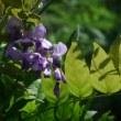庭の花2017.7.22