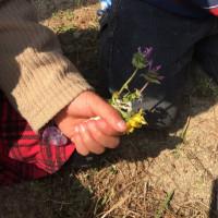 春の七草探し