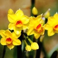 春を待ちわびる・・・③ 【ひで某】