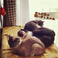 ニャンゴ3姉妹☆