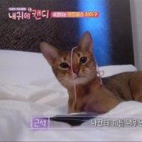 kimskennelさんブログ&instagram 끼끼 キキ