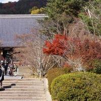 07日の散歩 ( 仁和寺往復で初冬探し? )