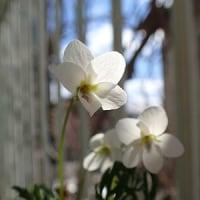 平成29年3月8日(水) 我が家の春♪
