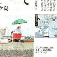 釣った魚を猫にやる風景・・・・和歌山県なら罰せられるよ!