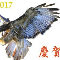 2017年 元旦