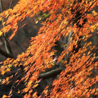 紅葉狩り  - 横浜自然観察の森 -