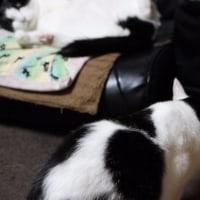 見せる猫と見る猫ww
