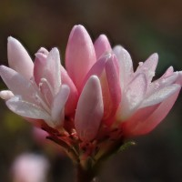 可愛い魅力的な花です。