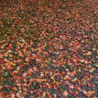 赤、黄、茶、緑が攪拌され混ざり紅葉色になる。