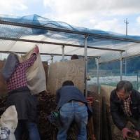 農業実践教室第21期:10回目~冬なので、霜対策・寒さ対策と落ち葉を拾って堆肥づくり