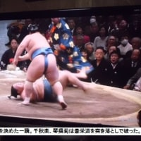 スポーツ三昧、テニス、駅伝、大相撲