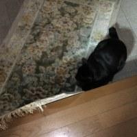 トノと玄関マット