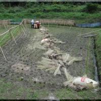 稲漕ぎを終えました
