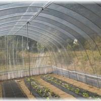 京黒山のハウスにきゅうりを定植