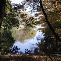 理窓会記念自然公園の紅葉2016・11・25