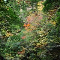 過去の写真~紅葉(西中国山地国定公園・龍頭狭)