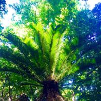 沖縄一のパワースポット 大石林山
