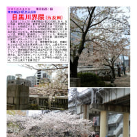 散策 「東京南西部-263」   目黒川界隈(五反田)