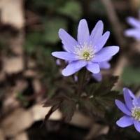 安曇野の春 ⑤