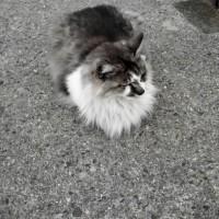 今日のペルシャ猫さん