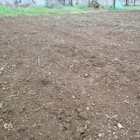 2017年3月26日 今日は、雨のため畑作業は休みです。