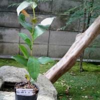 庭の花と大神神社で買った榊