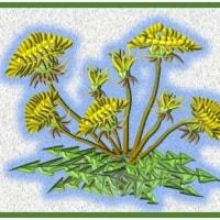 遊び心の「タンポポの花」を・・・