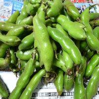 頂き物の空豆