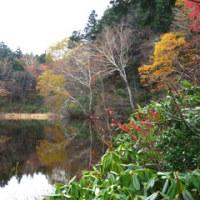紅葉は山を下りていきます