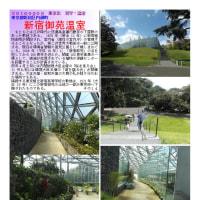 花巡り 「温室・熱帯植物-その3」 新宿御苑温室