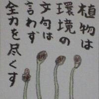 2017年2月27日の絵手紙