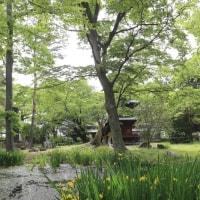 きょうの日吉八幡神社境内
