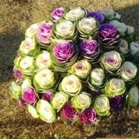 冬空に彩る花たち・石楠花・薔薇・葉ボタン他・・12/2誕生花・カーネーション