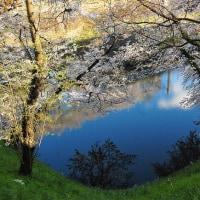 水の青、桜のピンク。