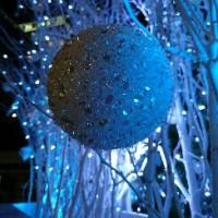 クリスマスツリー前にて…