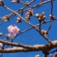 一足先に春を・・・巻