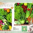 Learn Putonghua – vegetables 蔬菜 (Shūcài)