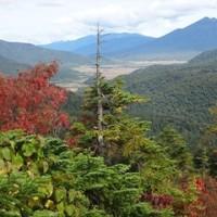 尾瀬の至仏山へ登りました。