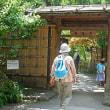 7月22日(土) ハイキング「江戸川公園から椿山荘・戸山公園散策」